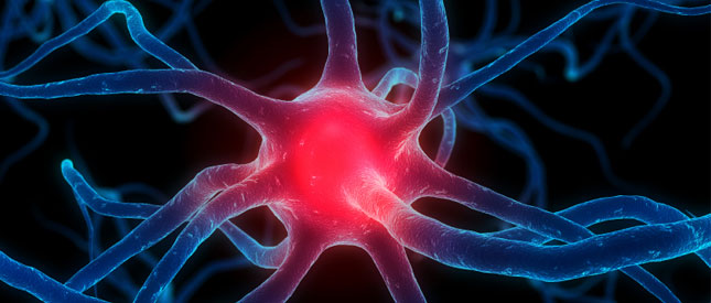 Denkimpuls_Neuromarketing_Gehirn